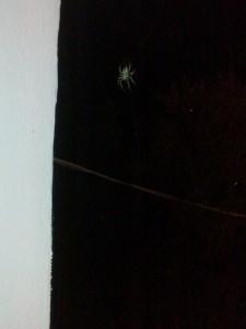 3.spider